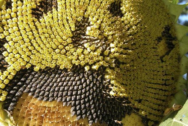 Montr al botanical garden index seminum space for life for Biodome insectarium jardin botanique