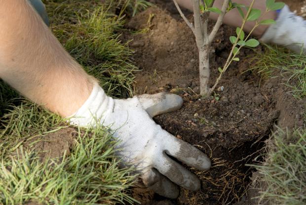 Steps for planting