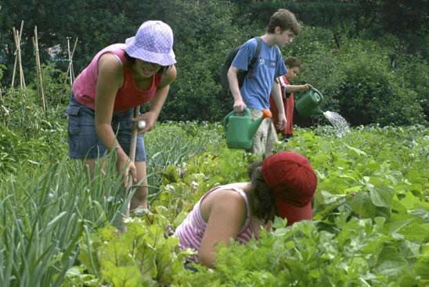 La période de récolte aux Jardins-jeunes.