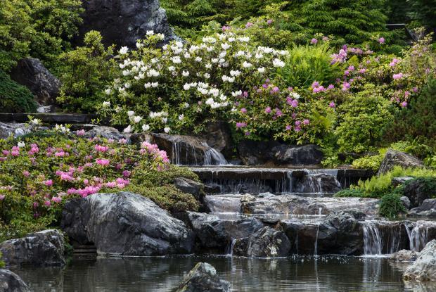 Jardin ornemental