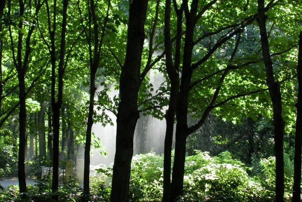 Hardwood forest.