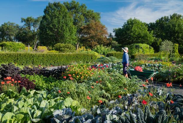 A woman carries a cart through a flower garden.