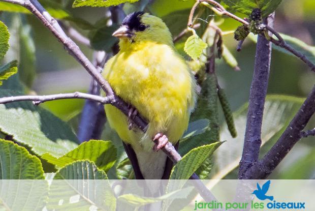 Jardin pour les oiseaux   Espace pour la vie