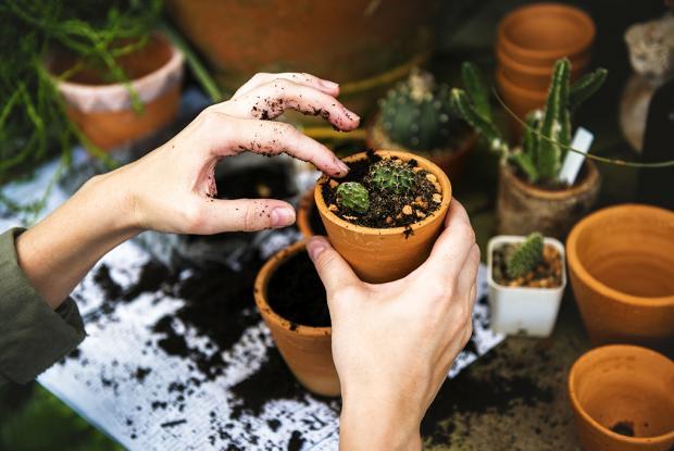 Jardiniers à la maison
