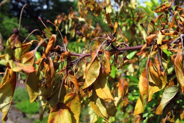 Arbres n glig s ou bless s espace pour la vie - Calendrier taille arbres fruitiers ...