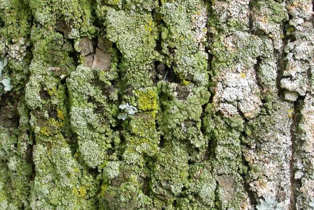 Lichens And Trees Space For Life