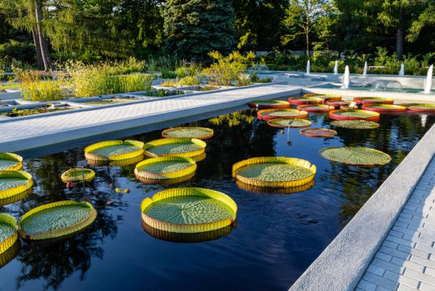 The Aquatic Garden