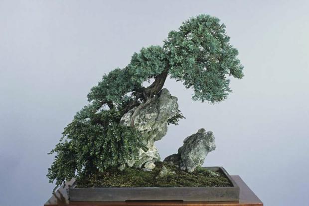 Bonsa s d 39 ext rieur versus d 39 int rieur espace pour la vie for Entretien bonsai interieur