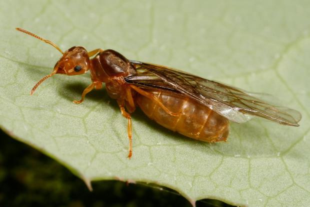 les fourmis la vie en soci 233 t 233 espace pour la vie