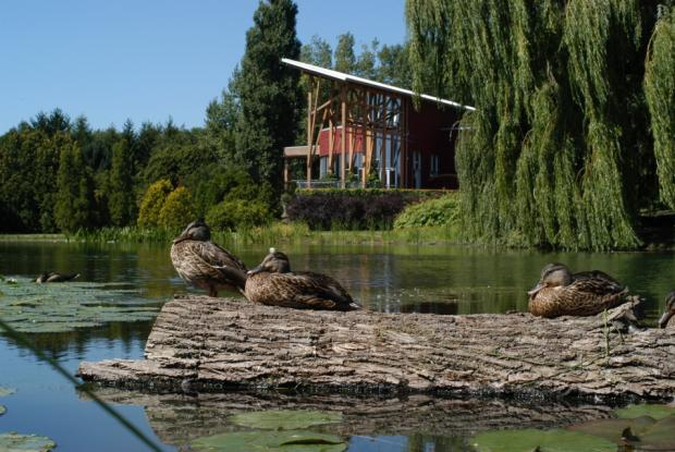 Ducks at the Tree House pond.