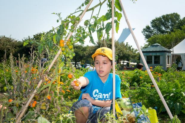 Youth Gardens 2013