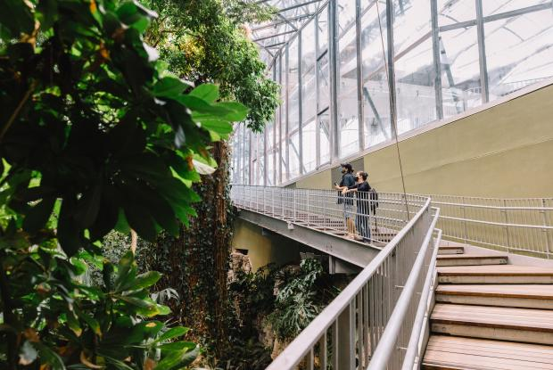 The Tropical Rainforest of the Biodôme