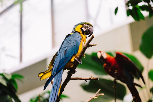 La Forêt tropicale humide du Biodôme