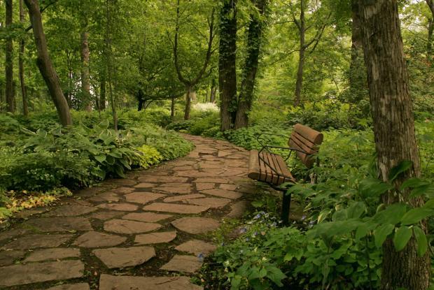 Vue générale - Jardin du sous-bois