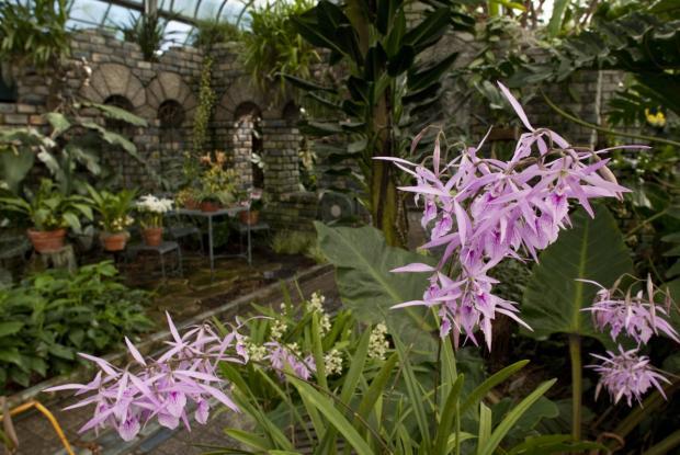 Serre des orchidées et des aracées