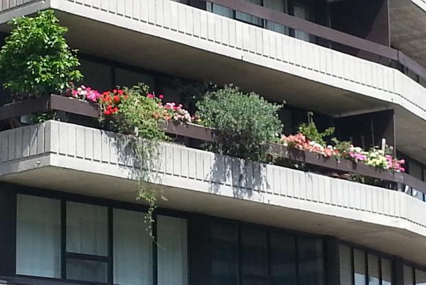 Balcon botanique en plein centre ville de montreal space - Balcon de ville ...