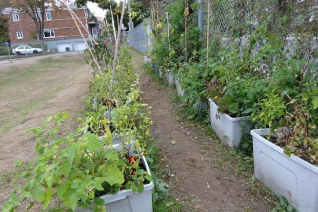Jardin urbain katimavert space for life for Jardin urbain