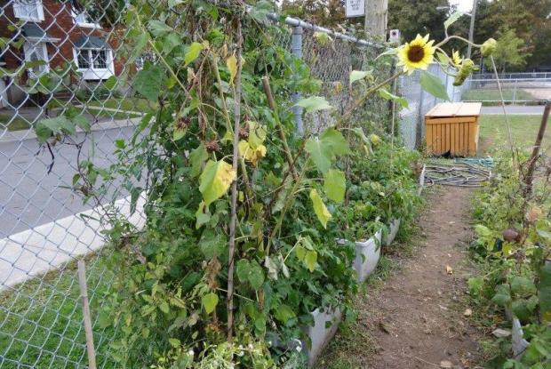 Jardin Urbain Katimavert Space For Life