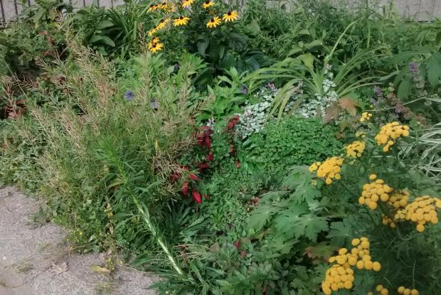 creer une application universite de montreal