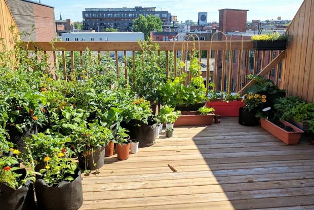 d licieux potager sur terrasse dans le mile ex space for life. Black Bedroom Furniture Sets. Home Design Ideas