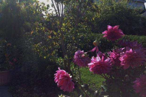 Jardin italien espace pour la vie for Jardin italien