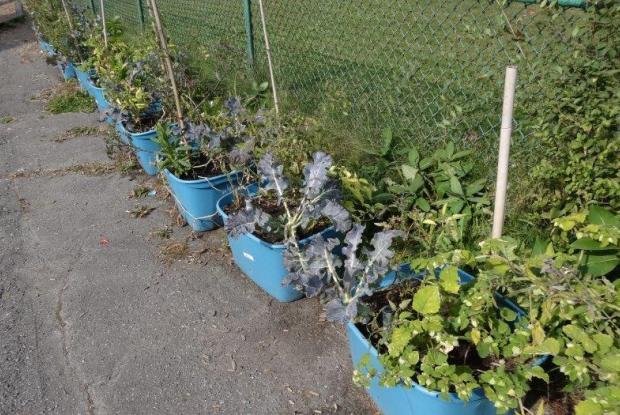 Vue du jardin espace pour la vie for Ca vient du jardin