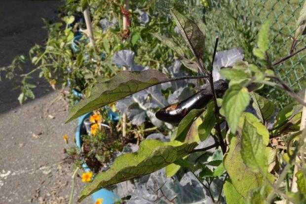 Vue du jardin space for life for Ca vient du jardin