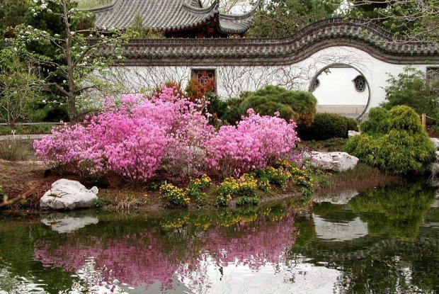 L ments du jardin de chine espace pour la vie for Jardin chinois