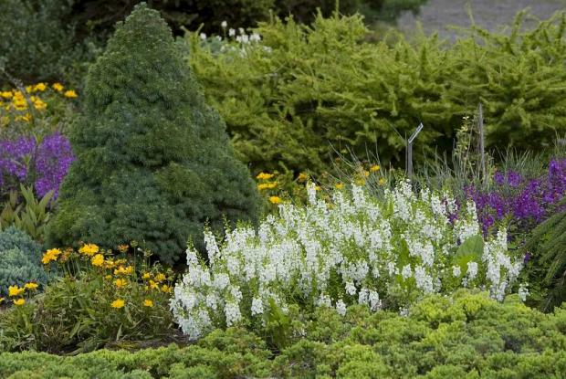 Jardin des arbustes