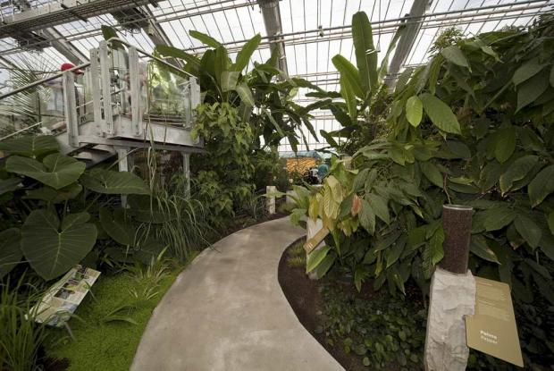 Serre des plantes tropicales alimentaires