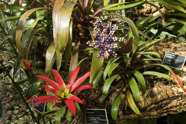 Tropical Rainforest Greenhouse