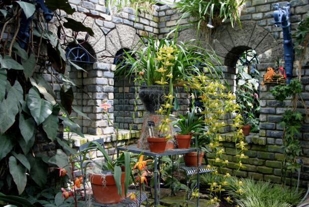 Sur des murs en ruines la nature reprend ses droits à la Serre des orchidées et des aracées.