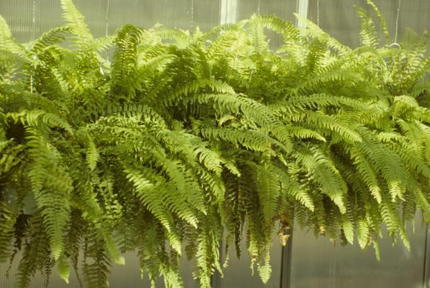 Bringing your plants indoors and outdoors space for life - Plantes exterieures plein soleil ...