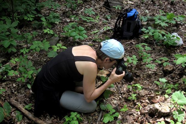 Photographier les arthropodes.