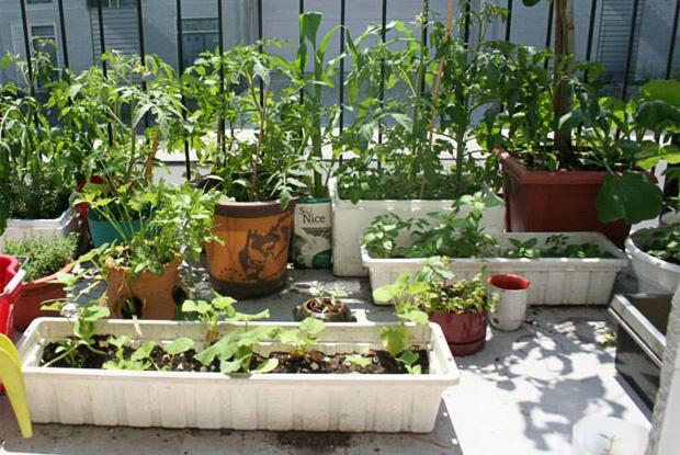 Jardinage sur le balcon