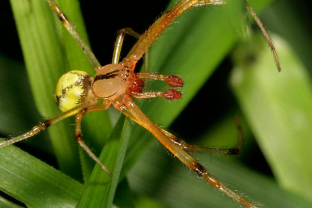 Spider, Québec, Canada.