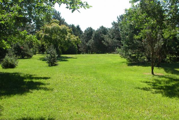 Pelouse - Arboretum
