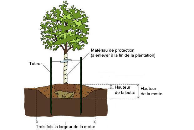 Plantation en sol mal drain espace pour la vie - Plantation arbre en motte ...