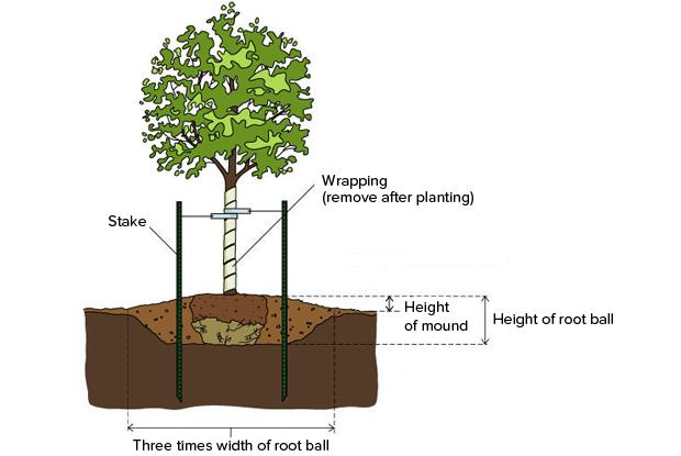 Planting in poorly drained soil space for life for Soil not draining