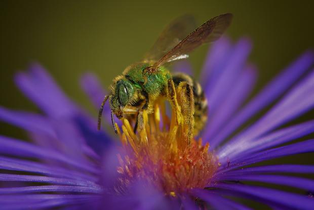 Attirer les pollinisateurs au potager espace pour la vie - Comment attirer les oiseaux dans son jardin ...