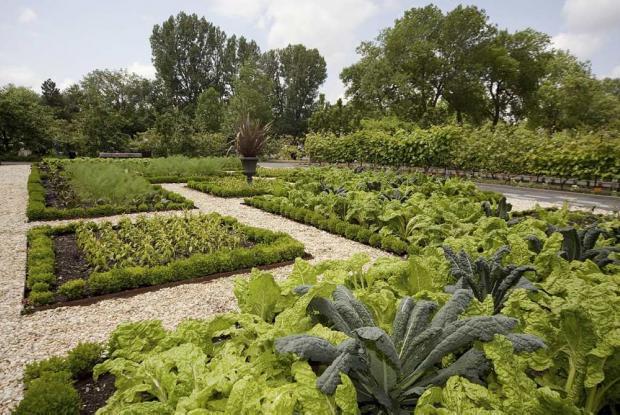 Plan d 39 un potager espace pour la vie - Plan jardin potager sureleve ...