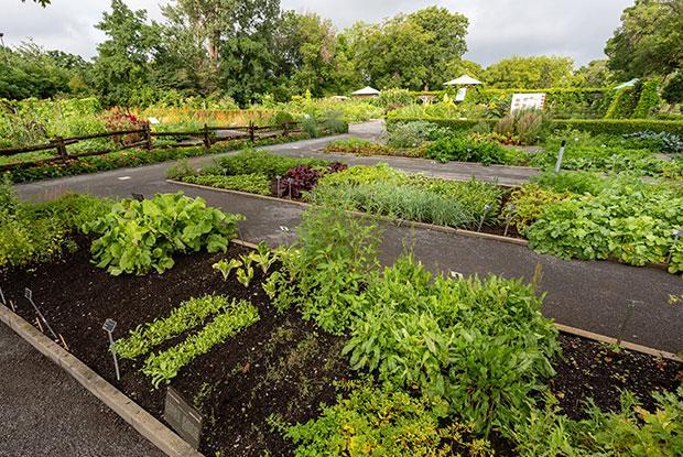 Vegetable gardens at the Jardin botanique de Montréal