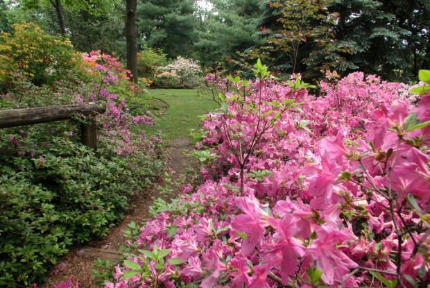 Le Jardin Leslie-Hancock abrite la collection de rhododendrons et d'azalées du Jardin botanique.