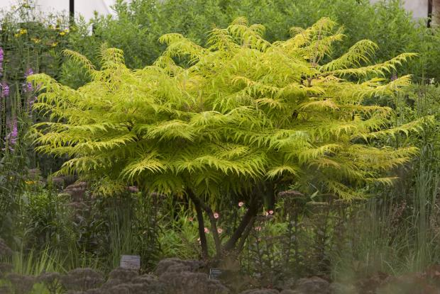 Fertilisation des arbres arbustes et vivaces espace for Arbre de jardin pour ombre