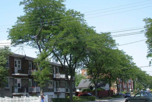 Trees along an urban street