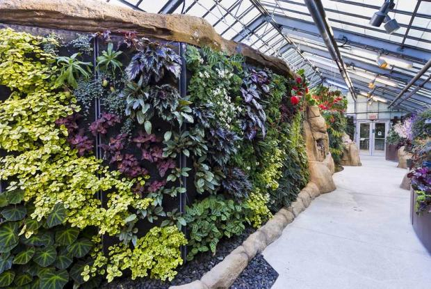 Begonias and Gesneriads Greenhouse