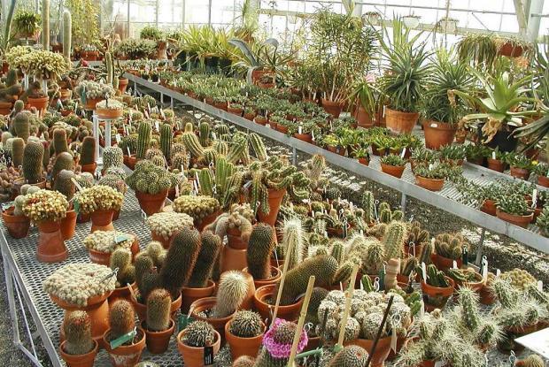 Coulisses du jardin botanique espace pour la vie for Le jardin des serres d auteuil