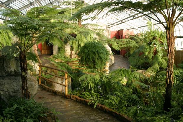Ferns Conservatory.