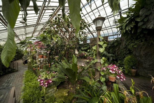 Serre des orchid es et des arac es espace pour la vie - Arrosage orchidee d interieur ...