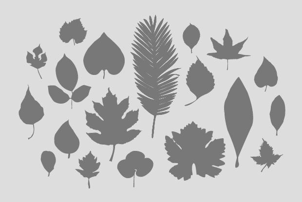 Illustration plantes génériques